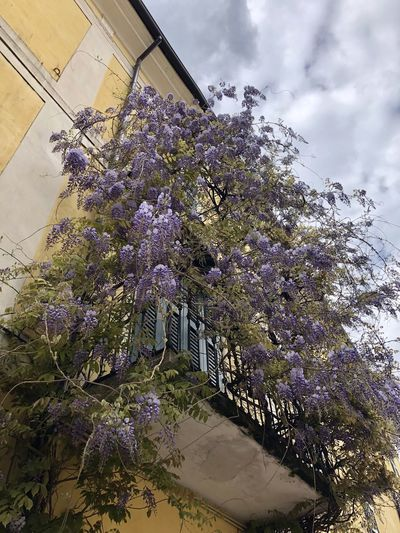 Low angle view of purple flowering plants against sky