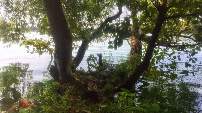 Weekly stroll along the banks of Langer See in Berlin Tree Plant Beauty In Nature Growth Tranquility Water Lake Nature Branch Day No People Tree Trunk Trunk Green Color Reflection Outdoors Tranquil Scene