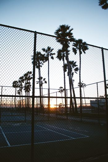 California Los Ángeles Los Angeles, California Sky Fence Barrier Boundary Nature Safety Chainlink Fence Day Protection Outdoors Sport Tree Security No People Plant Metal Sunset Silhouette Clear Sky Built Structure