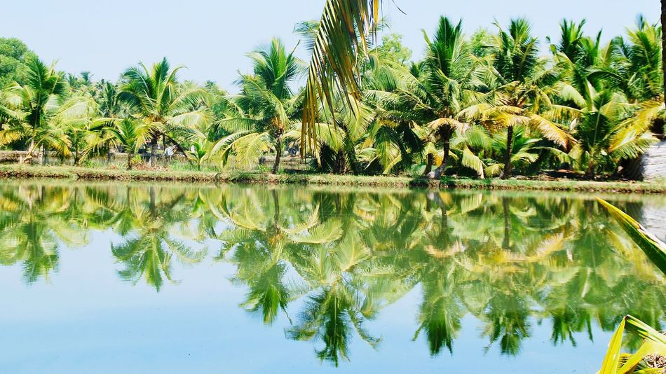 Backwaters Of Kerala Backwaters Licht Und Schatten Light And Shadow Greatday Palm Trees Green Grün Palmen Farbenspiel Colourful Spiegelung reflection Waterreflections  India Kerala Greenery Your Design Story The Great Outdoors - 2016 EyeEm Awards The Great Outdoors - 2017 EyeEm Awards