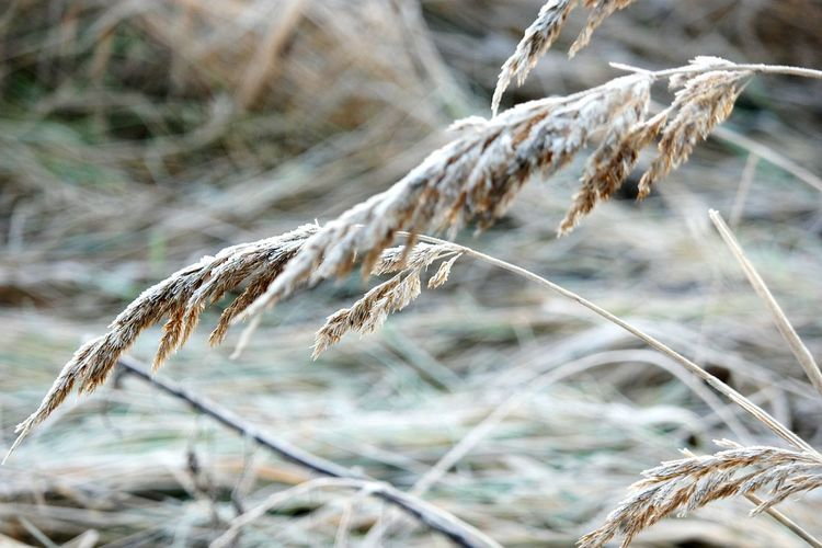 Nature_collection Naturephotography Plants Naturelovers Naturecollection Beauty In Nature Nature Beauty Beautiful Nature Nature_ Collection  Nature Photography DECEMBER2015 Winteriscoming Winter Morning