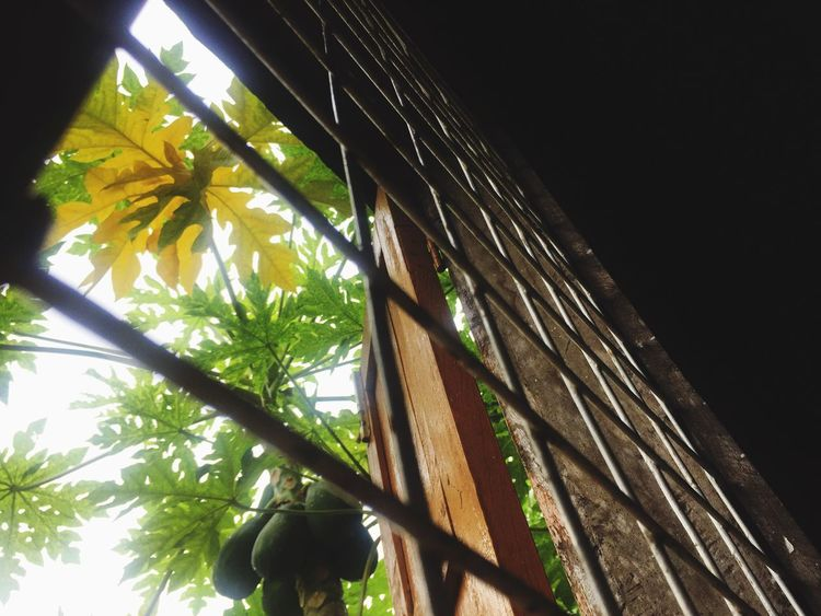 Low Angle View Leaf Fruits Windowview Leaf Vegetable