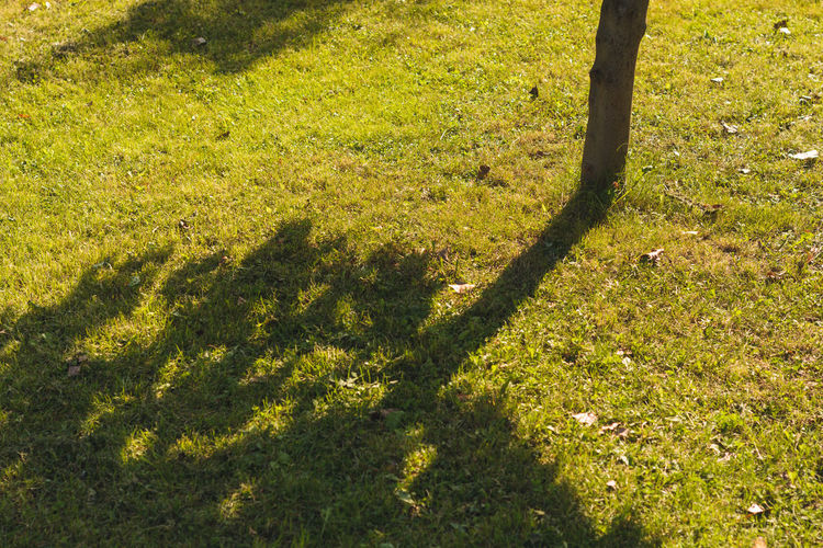 Autumn shadows Autumn Chilling Colors Grass Relaxing Textures And Surfaces Tree Autumn Shadows Beauty In Nature Day Folded Grass Texture Green Color Green Grass No People Outdoors Pattern Scenics Shadow Smellsgood Sunlight Sunlight And Shadow Tranquil Scene Tranquility Upside Down