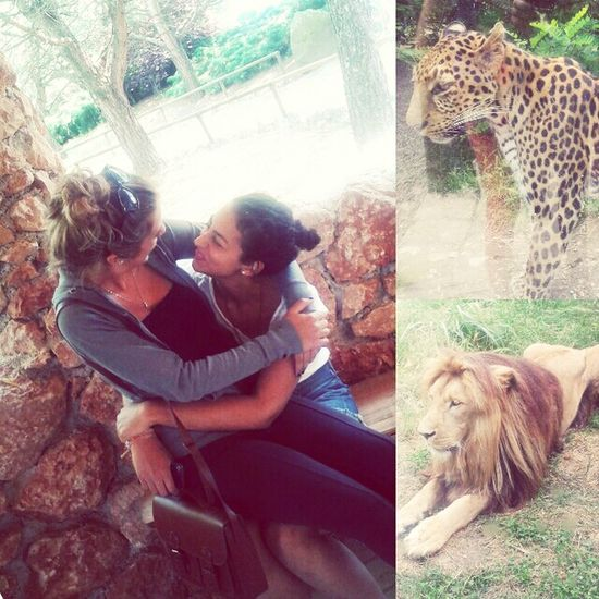 #zoo#friend#lion#tiger