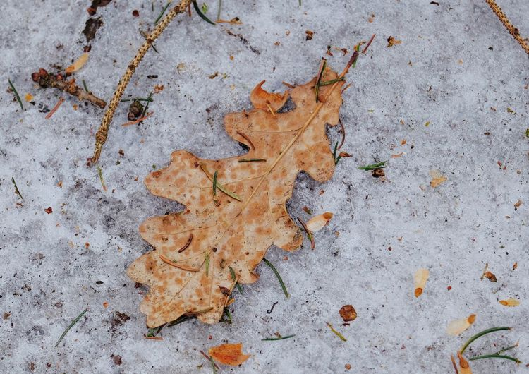 Leaf Plant Part High Angle View Orange Color Directly Above Falling Field Close-up Snow Covered Nature