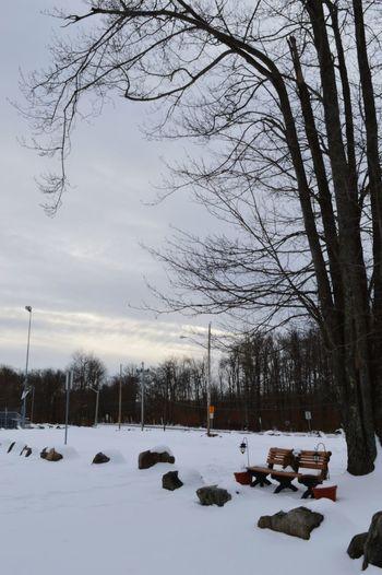 Winter day of 2015 Snow Poconos Bench Decorated Bench Tree Winter Skyporn Pennsylvania Footprints