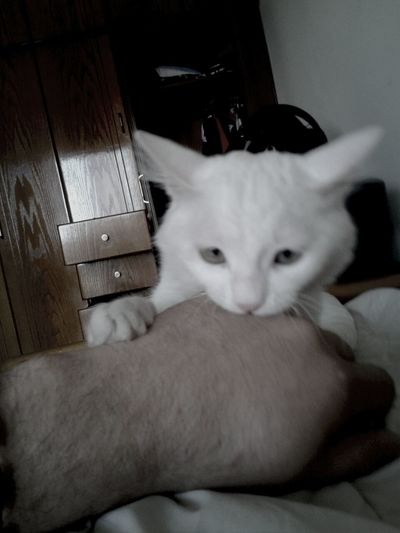 step 3 of Cat attack is the attack while getting pounded Playing With The Animals Cute Pets Check This Out