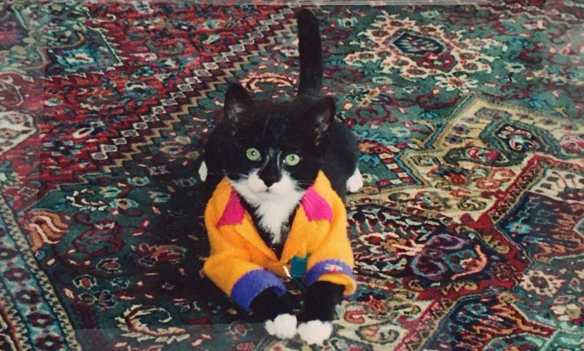 Dolores Cat Pets