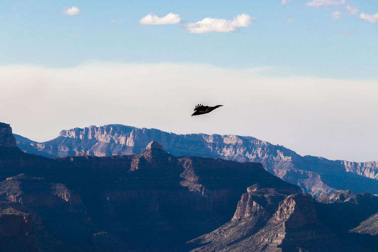 Bird flying over mountain range against sky