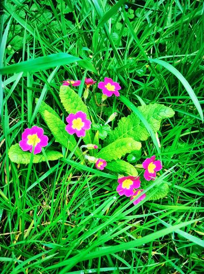Flowers in the Springtime! Beauty In Nature Outdoors Growth