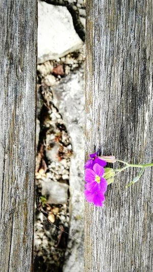 Simple summer background Flower Growth Plant Day Nature Outdoors No People Fragility Petal Close-up Built Structure Beauty In Nature Flower Head Freshness Summer Days Summer Background Simple Background Wood Bench