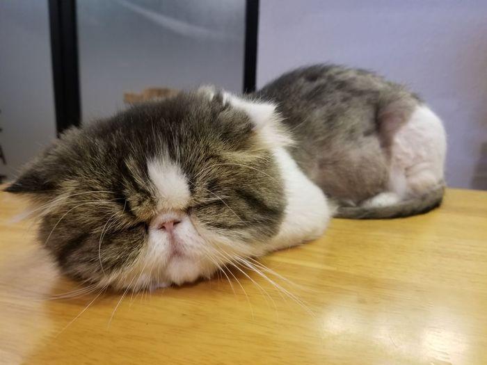 A cat I met in