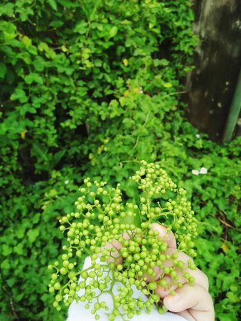 i love Plant Nature Beautiful Love ♥ EyeEm Selects Photographer Freshness Holysummer Photography
