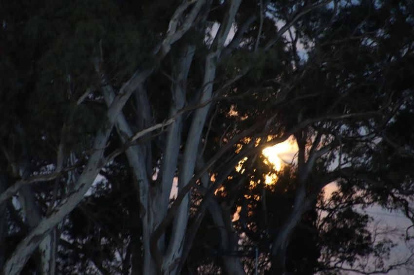 Moon rising Tree Plant No People Forest Nature Land Branch Night Outdoors