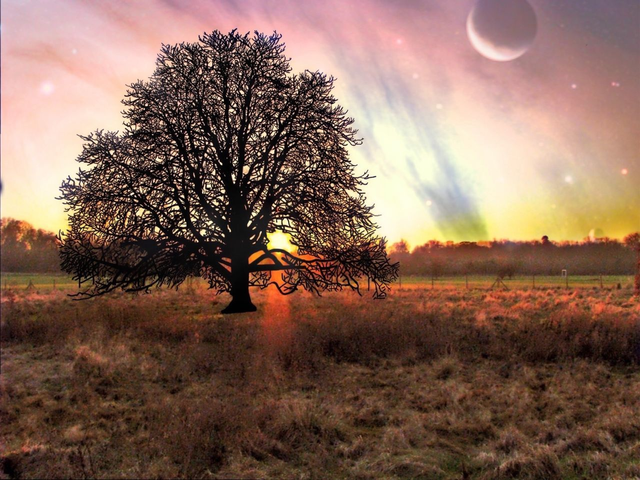 tree, bare tree, nature, field, beauty in nature, scenics, landscape, tranquility, sunset, tranquil scene, outdoors, sky, lone, tree trunk, grass, branch, no people, day