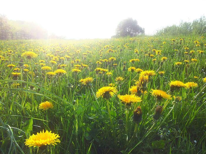 Spring. Poland