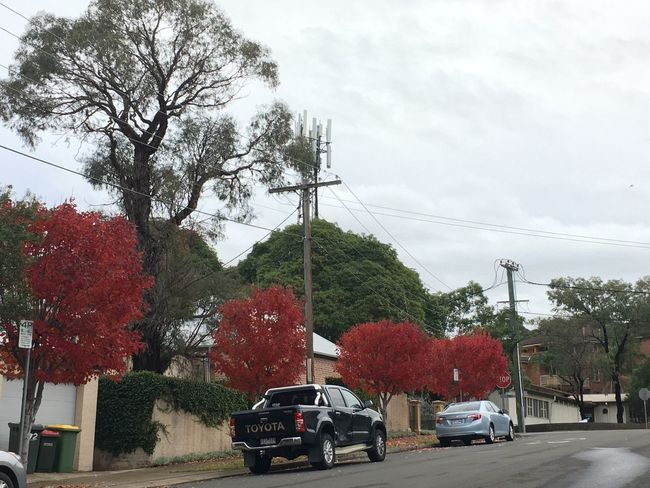 Parramatta Tree Car Transportation Land Vehicle Mode Of Transport Day Change Sky Outdoors Road Nature Growth Autumn No People Beauty In Nature Electricity Pylon