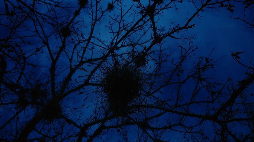 Macro Beauty HTC One M9 Tree Hanging Out Moss & Lichen Showcase: January
