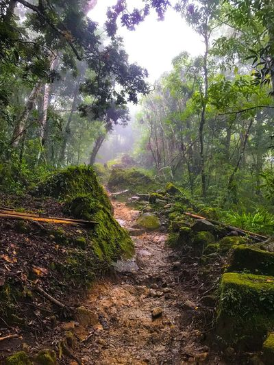 Clay walk Mystic Track Wet Rainy Cloud Costarica Hike Clay Plant Tree Growth Nature No People Wet Water Beauty In Nature Green Color Land Scenics - Nature