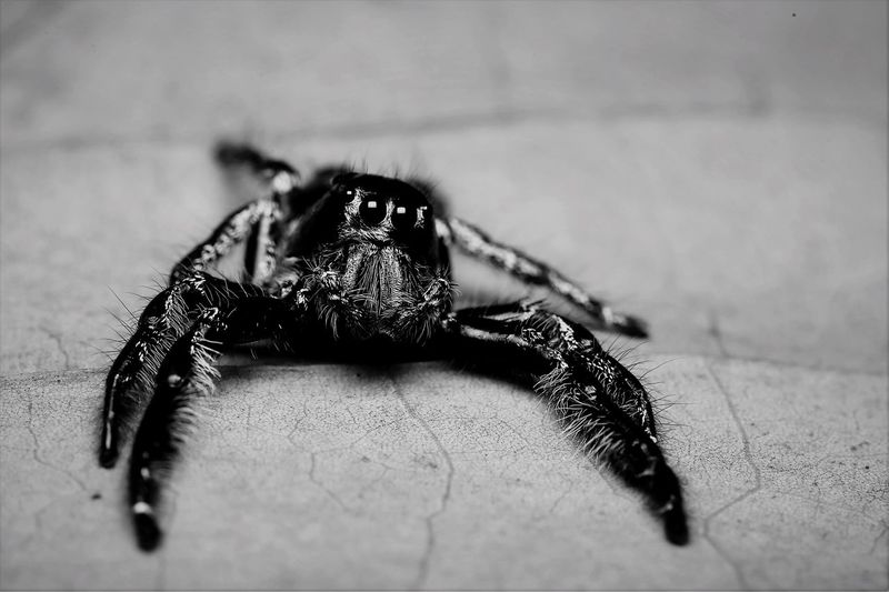 EyeEm Selects One Animal Selective Focus Spider Animal Themes Animals In The Wild Close-up Indoors  Animal Wildlife No People Day Nature