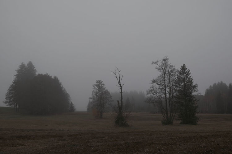 Tree Fog Land Environment Landscape Scenics - Nature Non-urban Scene Forest Nature Outdoors Hazy  Tranquility Field