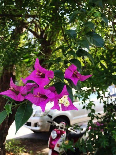 Thai flowers Day White Summer тайланд зеленый пурпурный цветы Природа Nature Green Purple Flower Flower Head Flowers Thailand Summer Exploratorium Summer Exploratorium