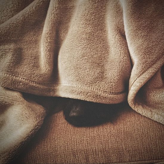 Peekaboo Dog Blanket Cosey Patterdale Terrier Sleeping Backgrounds Full Frame Textured  Textile Crumpled Pattern Sand Close-up Textured Effect Abstract Backgrounds Rough