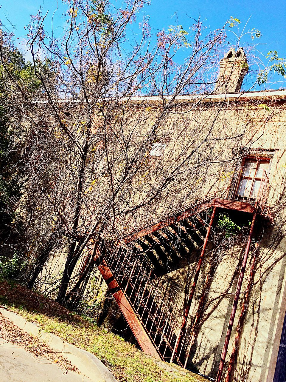 tree, railing, architecture, built structure, day, no people, outdoors, building exterior, low angle view, branch, sky, nature, clear sky