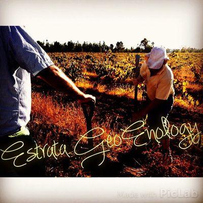 EstrataGeoEnology WinesOfChile Cauquenes Siguiendo con asesorías por el Maule