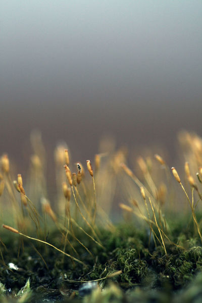 Green Green Color Nature Beauty In Nature Close Up Close Up Nature Close-up Closeup Closeupshot Dark Light Day Flora Focus On Foreground Grass Growth Macroworld Moss Nature No People Plant Selective Focus Selective Focusing Wheat