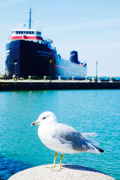 Cleveland LakeErie Seagulls Seagull Lake Moments Summer Beautiful Day Sunny Day Birds
