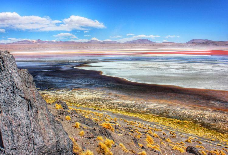 Landscapes With WhiteWall Flamingo Salar De Uyuni Bolivia