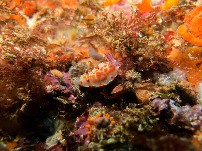 Slug in sea