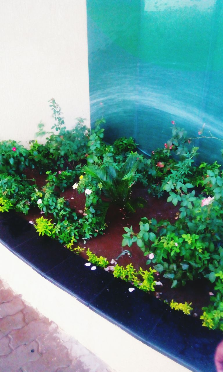 growth, plant, potted plant, no people, green color, freshness, day, nature, indoors, leaf, food, beauty in nature, close-up