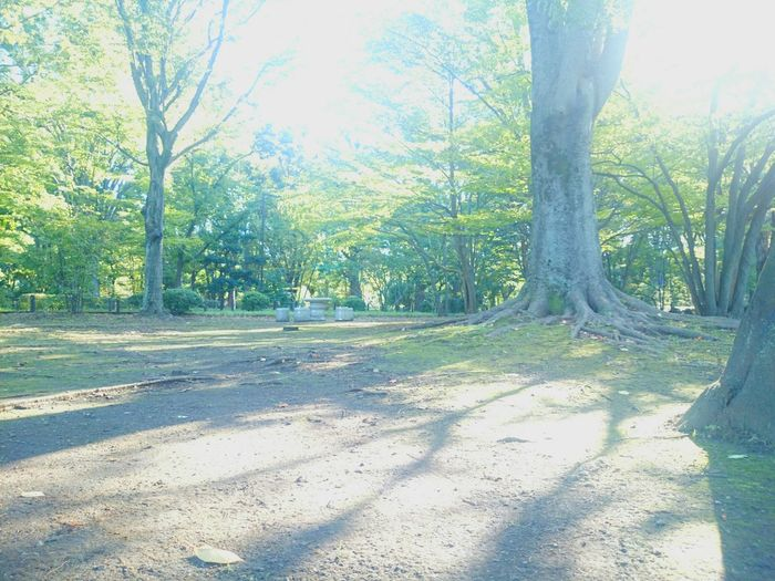 Hello World Good Morning! Walking In The Park Enjoying Life Sun Light Trees Light And Shadow Good Morning World! Love Nature EyeEm Nature Lover