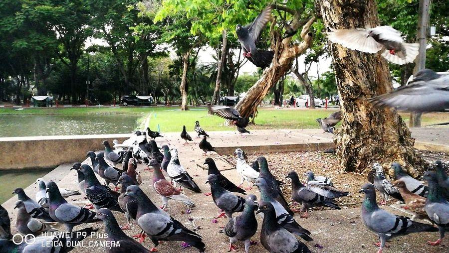 Bird Landing First Eyeem Photo