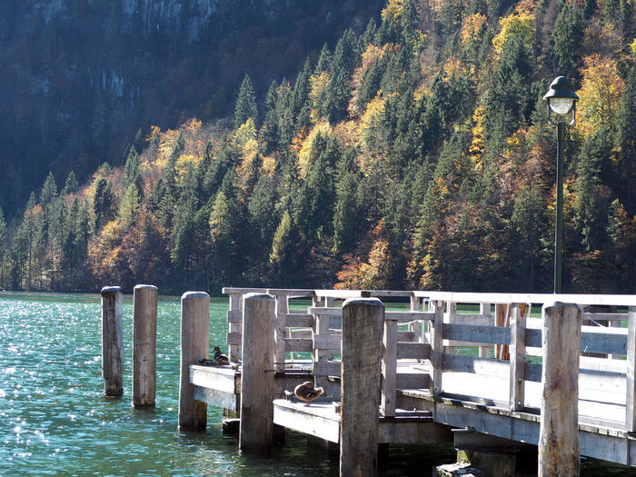Autumn Beauty In Nature Day Growth Lake Nature No People Outdoors Scenics Tranquil Scene Tranquility Tree Water