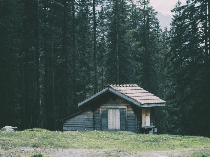 The little cabin The Great Outdoors - 2016 EyeEm Awards Forest Landscape Nature Cabin Switzerland Green Mood Kandersteg Exploring Adventure