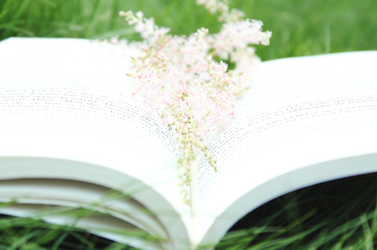 book, close-up, selective focus, no people, leaf, green color, day, outdoors, nature, paper, flower, grass, fragility, beauty in nature