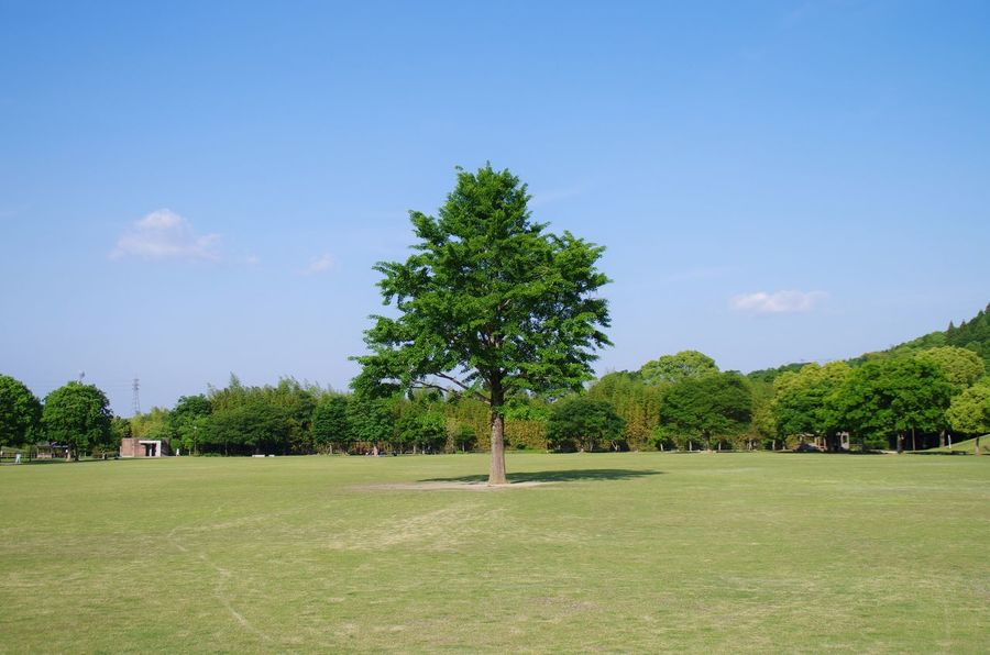 Tree Park Peace Sky Blue Green Oita 大分 Traveling Japan Hello World Relaxing Alone Landscape Colour Of Life Blue Sky