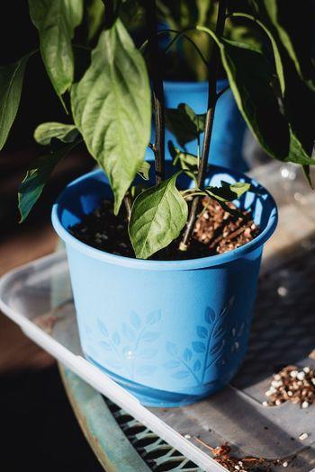 Plants and good