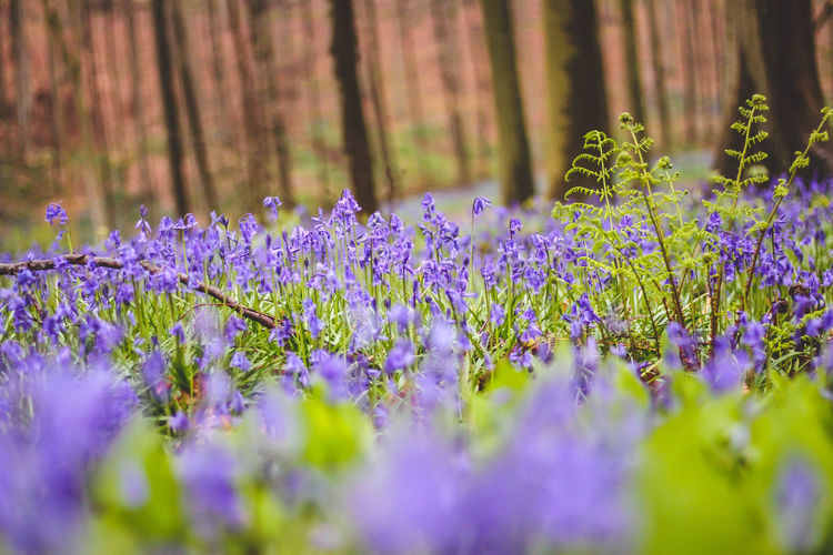 Beauty In Nature Flower Forest Nature Nature Nature_collection No People Outdoors Purple Purple Flower Purple Flowers Selective Focus Tranquility Tree Woods The Great Outdoors - 2017 EyeEm Awards
