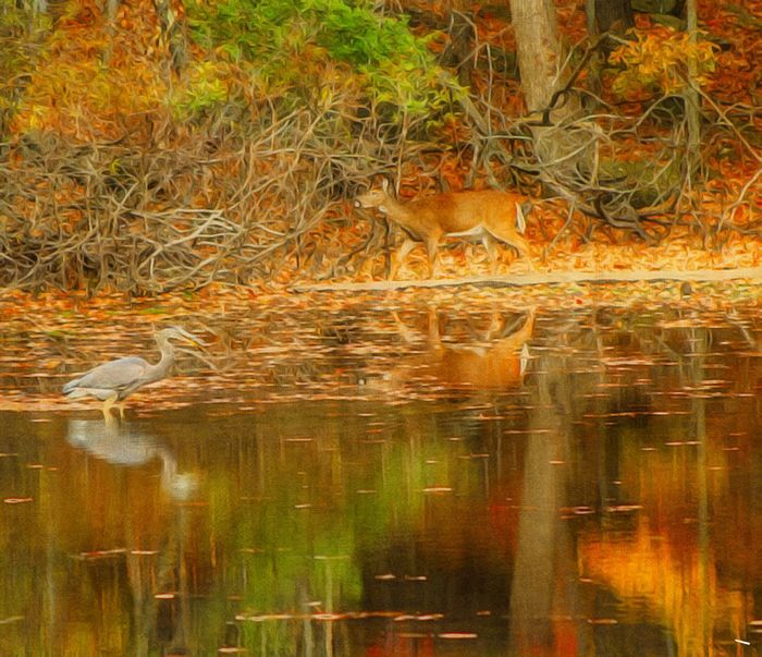 Beauty In Nature Animal Themes Animals In The Wild Bird Deer Water Reflections Autumn Colors Paint Edit Photo