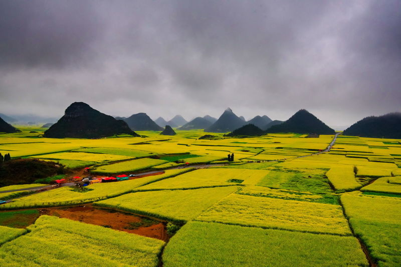 Canola field, rapeseed flower field with the mist in Luoping, China Luoping Rain Rapeseed Field Aerial View Agriculture Beauty In Nature Canola Canola Field Cloud - Sky Day Farm Field Fog Grass Hill Landscape Mist Mountain Mountain Range Nature No People Outdoors Rapeseed Oil Rapeseed Yellow Tadaa Rice Paddy Rural Scene Scenics Sky Tourism Tranquil Scene Tranquility Village