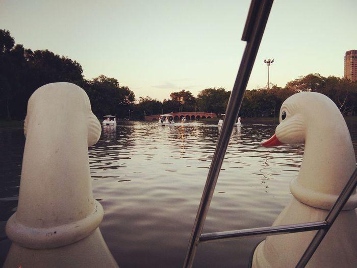 Duck boat Duck
