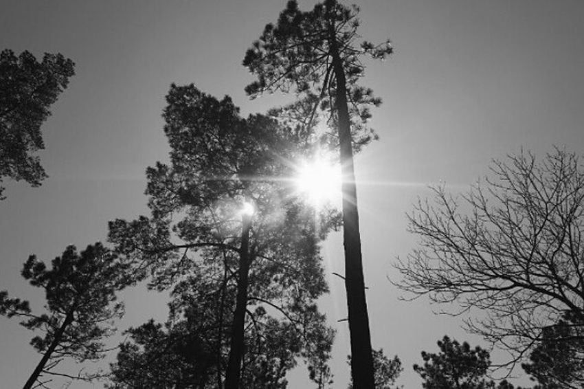 Trees Trees And Sky Treescollection Trees And Nature Light Sun Beatyinnature Monochrome Photography Blackandwhite Blackandwhite Photography Canonphotography Canon1200d Canon_photos Trowbackphoto Beauty In Nature Plants Photography Plants Collection Tree_collection  Growth Trowback Arouca Aroucageopark Portugal Art Is Everywhere