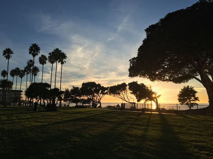 Tree Nature Sky Sunset Beauty In Nature Grass Palm Tree Silhouette Tranquility Growth Tranquil Scene Scenics Sunlight Outdoors Landscape No People Tree Trunk Day