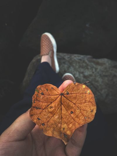 Close-up of woman hand holding leaf