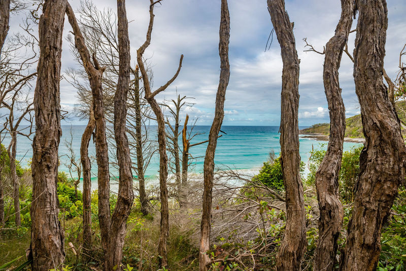 Australia Australian Landscape Beach Beauty In Nature Close-up Day Growth HDR Horizon Over Water Landscape Landscapes Nature No People Noosa Outdoors Scenics Sea Sky Tree Water