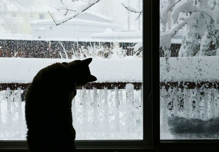 Silhouette cat looking through window at home during winter